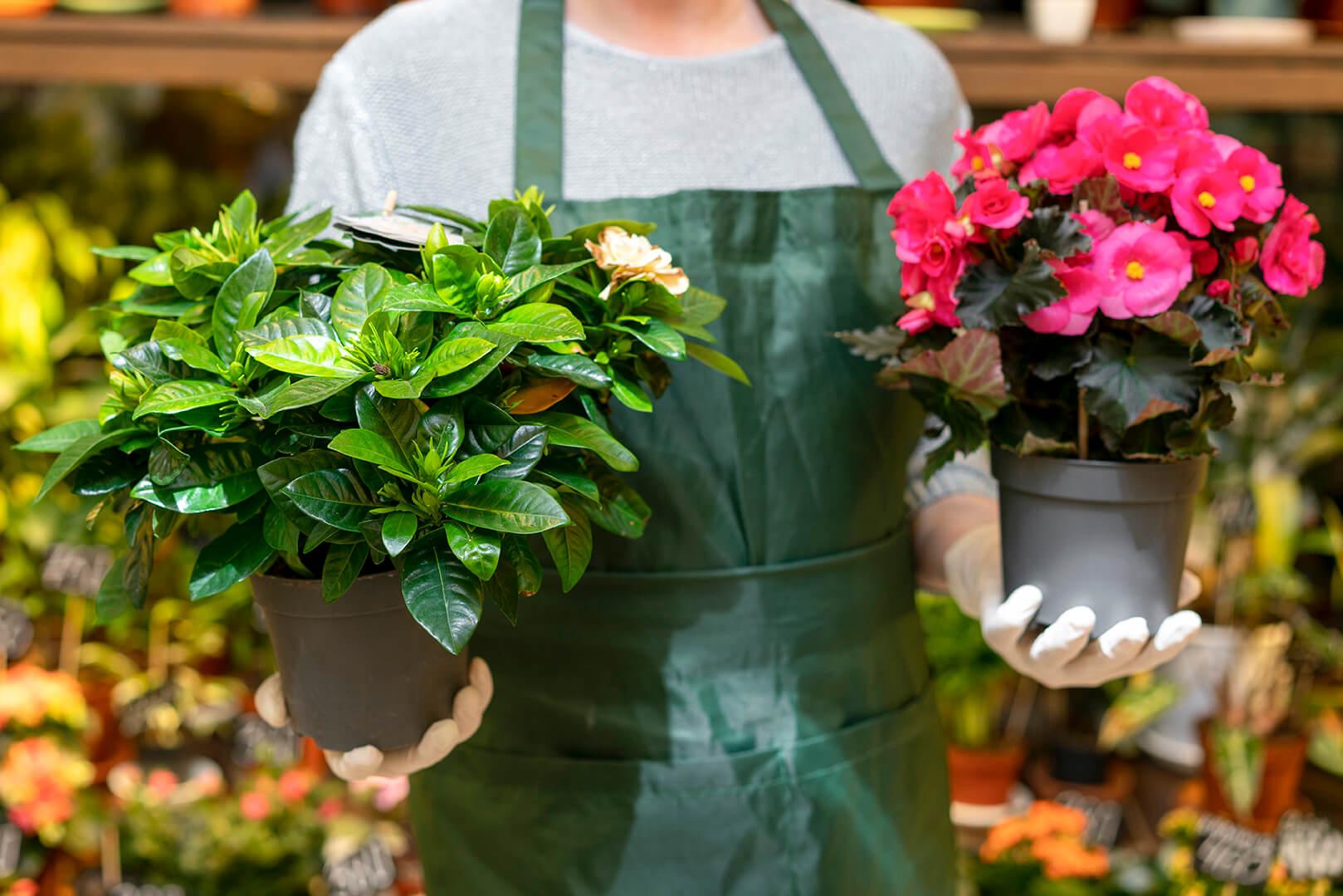 משלוחי הצמחים שלנו
