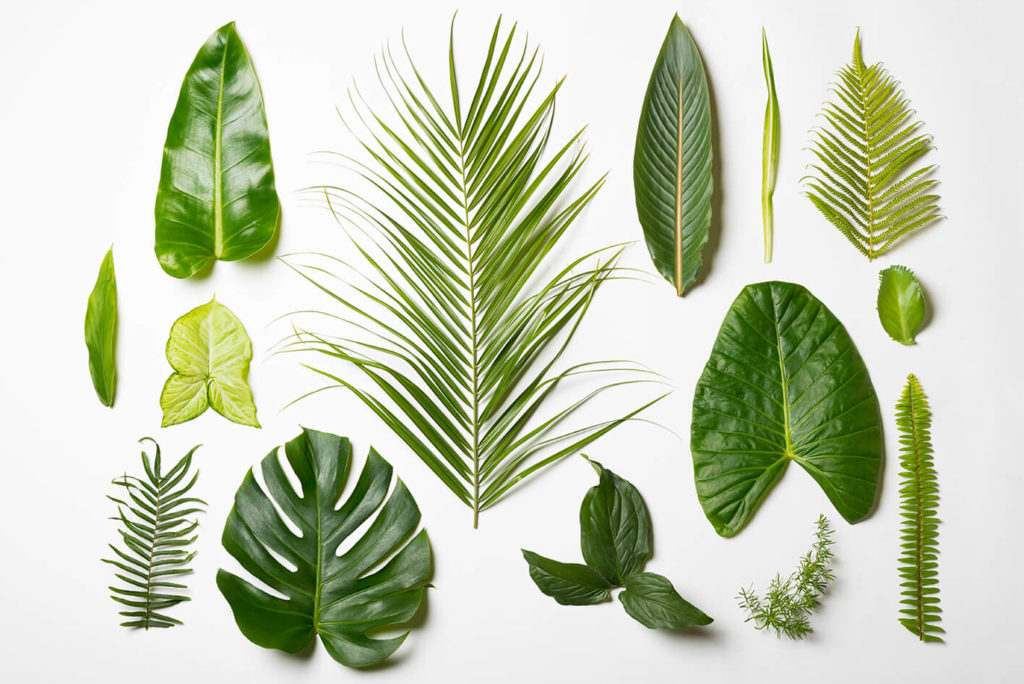 הצמחים שלנו