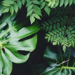 צמחי חוץ ושמש