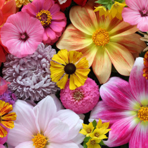 פרחי העונה